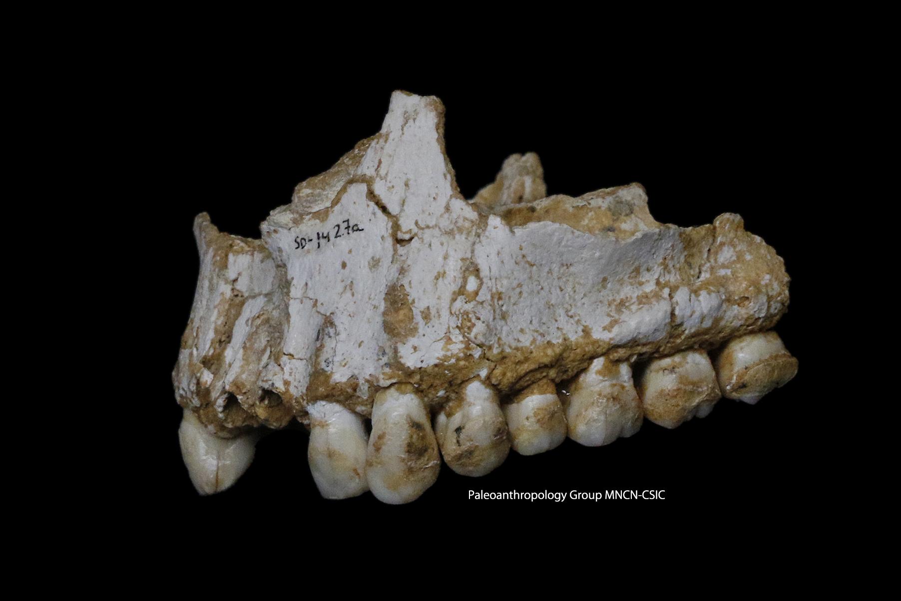Ανέλυσαν DNA από μασέλα Νεάντερταλ και βρήκαν ίχνη ασπιρίνης! [εικόνα] - Εικόνα