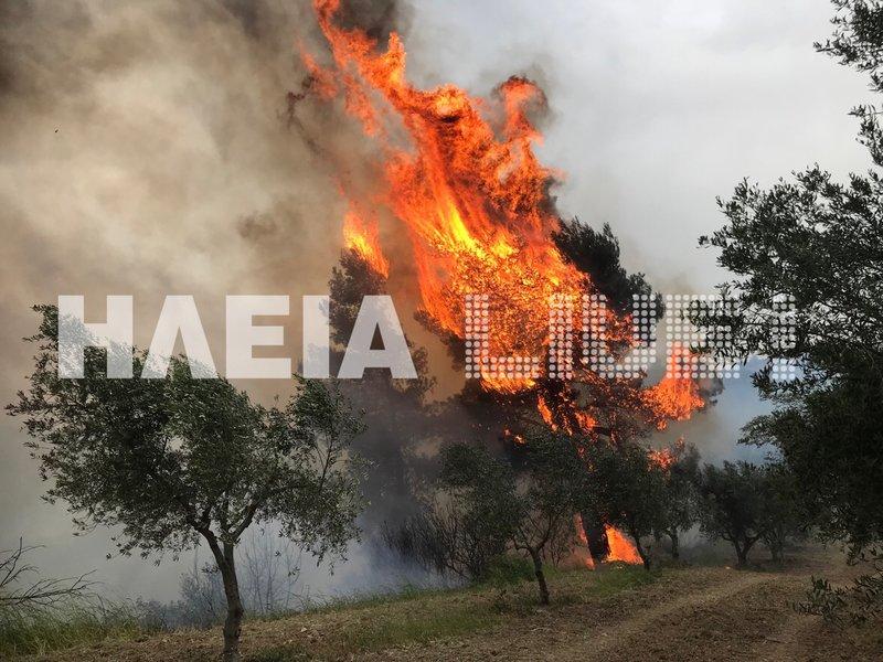 Μεγάλη πυρκαγιά στην Ηλεία: Μαίνεται ανεξέλεγκτη -Οι άνεμοι την «σπρώχνουν» προς την αρχαία Ολυμπία (εικόνες) - Εικόνα0
