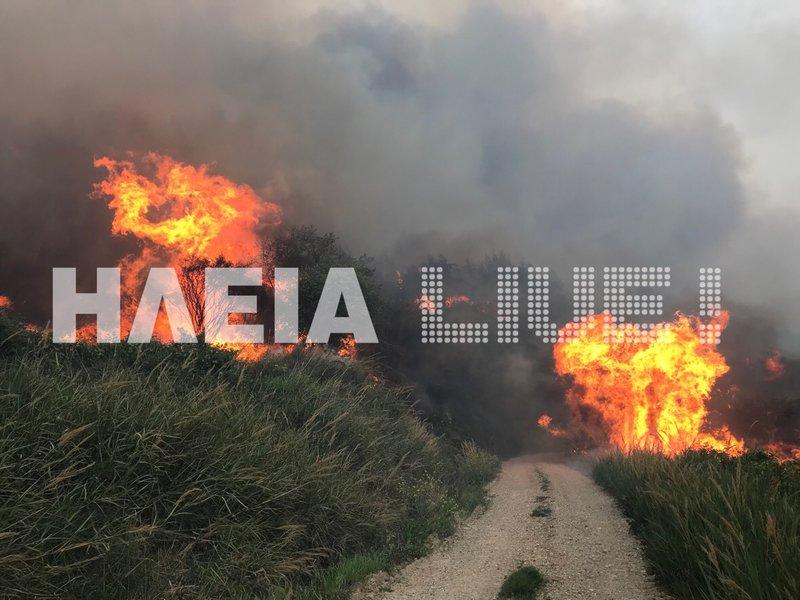 Μεγάλη πυρκαγιά στην Ηλεία: Μαίνεται ανεξέλεγκτη -Οι άνεμοι την «σπρώχνουν» προς την αρχαία Ολυμπία (εικόνες) - Εικόνα1