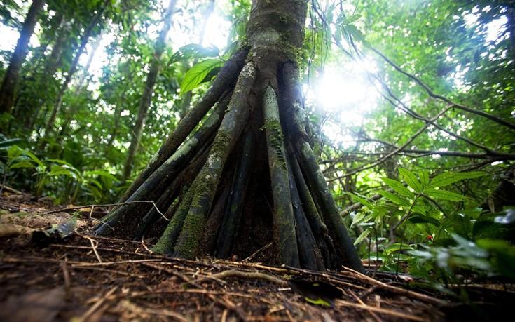 Το μυστηριώδες δάσος του Εκουαδόρ όπου τα δέντρα περπατούν - Εικόνα1