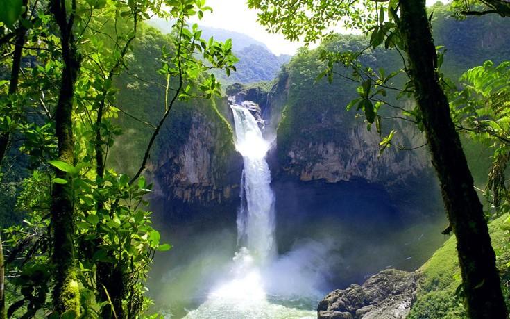 Το μυστηριώδες δάσος του Εκουαδόρ όπου τα δέντρα περπατούν - Εικόνα6