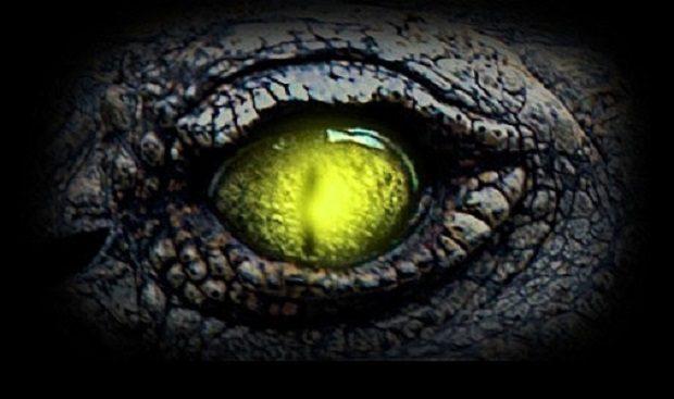 430247-reptilian-eye